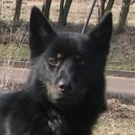Hund Rex - weitere Infos im Steckbrief [(c) Karsten Braun]